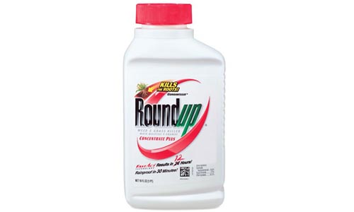 Roundup Weed Grass Killer Concentrate Plus, 16-Ounce